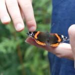 vlinders-oplaten